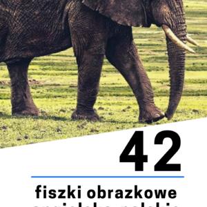 fiszki obrazkowe 300x300 - 42 fiszki obrazkowe angielsko-polskie: Zwierzęta