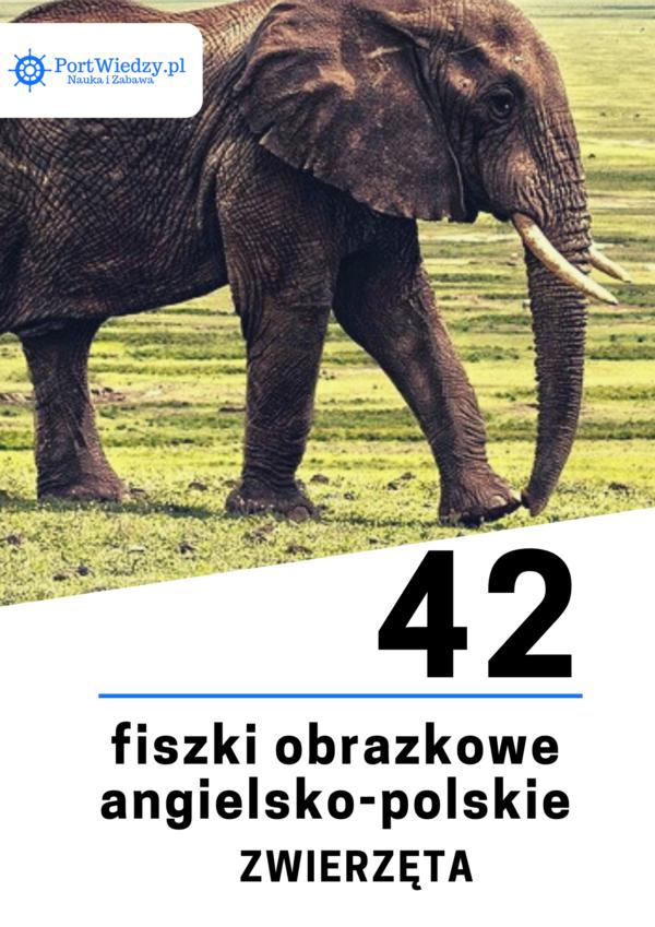 fiszki obrazkowe 600x849 - 42 fiszki obrazkowe angielsko-polskie: Zwierzęta